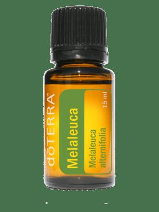 Melaleuca alternifolia (teatree)