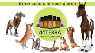 Introductie workshop etherische olie en dieren